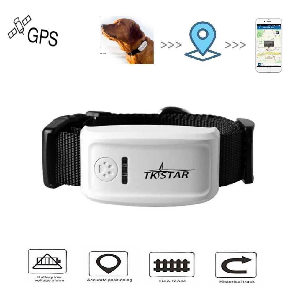 Les meilleurs trackers et colliers GPS pour chat